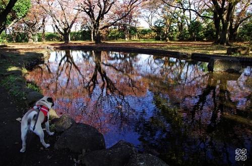 02.公園散歩.jpg
